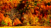 vivid wall : Autumn trees leaves as nature background