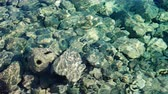 seixos : Clear sea water and stone as background