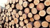 ombro : Pile of wood wooden logs in forest 4K