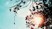 outonal : Autumn maple tree leaves against sky
