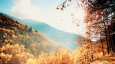 scenérie : Autumnal trees forest mountains landscape