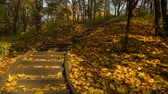 passos : Stairs stairway in autumn fall park forest. O4K steadicam shot ProRes HQ codec.
