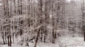 холодный : Winter forest. Trees covered with snow.