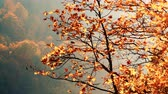 vibrante : Autumn trees leaves as nature background