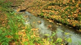 Creek in autumn forest with green grass and fallen leaves. Full HD with motorized slider. 1080p.
