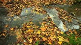 brook : Creek in autumn forest with green grass and fallen leaves.