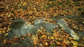 gras : Creek in autumn forest with green grass and fallen leaves. Full HD with motorized slider. 1080p.