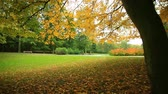 моторизованный : Beautiful autumn trees with colored leaves in park. Full HD with motorized slider. 1080p.
