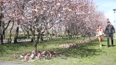 flirten : Dating. Young woman and man walking, smiling, sitting in a cherry blossom park at sunny spring day