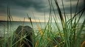 日の出 : Baltic sea by sunset with green grass reeds growing on stone shore in the foreground. Full HD with motorized slider. 動画素材
