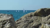 regata : A sailboat on the horizon in sea