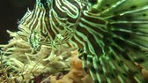 yellow : Eye close up of beautiful tropical fish  Stock Footage