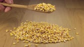 pours out : Corn grains get enough sleep from a wooden spoon on a pile of corn Stock Footage