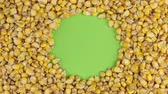 raw : Rotation of the corn grains lying on a green screen, chroma key.