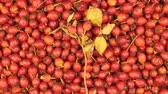 yaprak döken : Rotation of rose hips and stem with leaves. Medicine and Health.