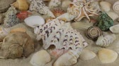 denizyıldızı : Rotation, close-up of background of seashells and stars lying on the sand.