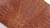 selvagem : Rotation, natural reptile skin, can be used as background, texture. Isolated. Stock Footage