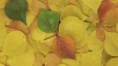 yaprak döken : Rotation and zoom of autumn leaves background. View from above. View from above.