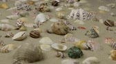 mollusk : Zoom, approximation seashells on the sand beach.