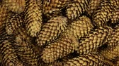 ladin : Close-up, texture of heap conifer cones. Rotation. Background of cones. Stok Video