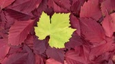 Rotation and zoom of autumn background from leaves.