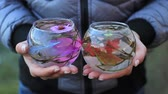 branches : decorative aquarium with flowers and decorations in female hands Stock Footage