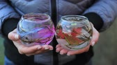 vaso : decorative aquarium with flowers and decorations in female hands Stock Footage
