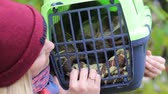 travel cage : girl holding a cat carrier with a cat Stock Footage