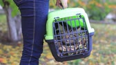 peep : girl holding a cat carrier with a cat Stock Footage