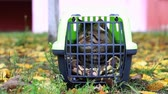 travel cage : carrier with a cat
