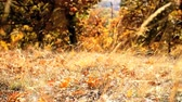 description : autumn natural