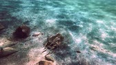 scuba diving underwater fish 4k 動画素材