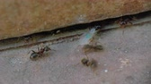 haşarat : wings ants by the wall close up 4k