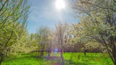 blossoming : Spring garden, cherry blossoms and the sun, panoramic time-lapse