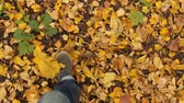 november : Men Feet Closeup walking In the Autumn Forest Stock Footage