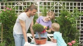 gerbera : Happy european family enjoying gardening in back yard of their house. Planting flowers, decorating the world.