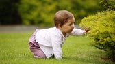 A cheerful baby-girl is sitting on the green grass near the bush in the city park. Vídeos
