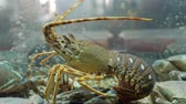 krab : lobsters, shells and crabs in aquarium at a seafood market fresh restaurant cafe bar