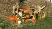 Thanksgiving Day spirit of the fall - picture of bales of hay and assorted pumpkins, squashes, gourds, corncobs. Thanksgiving Day decoration.  Vídeos