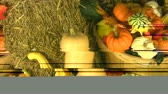Zoomed motion picture of different pumpkins and flowers typical for the fall season.  Стоковые видеозаписи