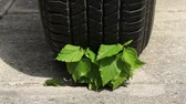 The human activities and most of all car driving is killing environment in which we are living. Car tire ready to go trough and kill green plant growing trough concrete.   Стоковые видеозаписи
