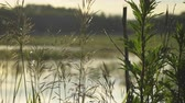 junco : Gulls on the ponds of the fish farm Stock Footage