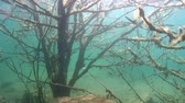 wood : Tree under water - a surreal spectacle. Ukraine. Stock Footage