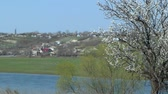 damasco : Ukrainian spring rural landscape: in the foreground a flowering tree, in the back village.