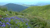 campanário : Mountain landscape with a glade covered with blue flowers in the foreground.