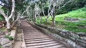 신성한 : Mihintale, Sri Lanka, old staircase leading to the top 4K