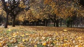проливая : Fall park scenery with mighty strong wind blowing leaves