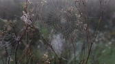 капля : Spider web in the light of the rising sun in fall autumn