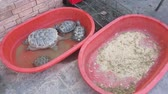 tartaruga : Xinjiang China Turtles and Scorpions Alive for Sale at Market Stock Footage
