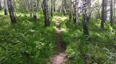titrek kavak : Panning through a forest while trekking the mountain in summer. Hiking trail in woods